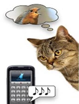抖音猫语翻译是什么软件?抖音什么app可以翻译猫语[多图]