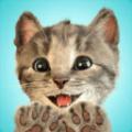 我最喜爱的猫猫游戏安卓版 v1.0