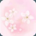 樱花秀直播