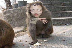 抖音猴姐是谁?抖音猴姐表情包分享[多图]图片1