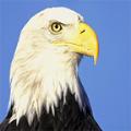 白头鹰网络兼职