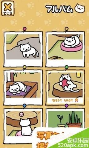 猫咪后院图3: