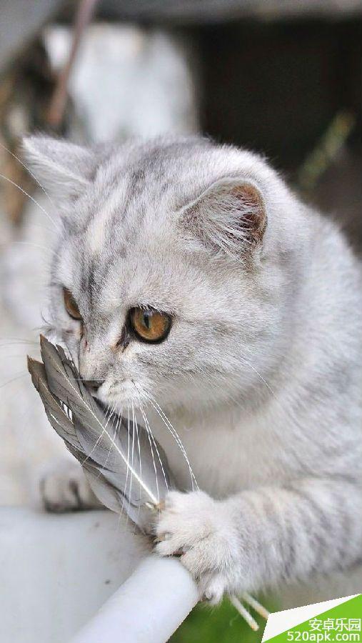 可爱猫咪手机壁纸640*1136[多图]